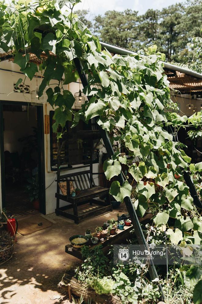 Có một nơi ở Đà Lạt người trẻ bỏ phố lên rừng làm bánh trà - xà phòng thơm, xây thanh xuân lộng lẫy cho riêng mình! - Ảnh 15.