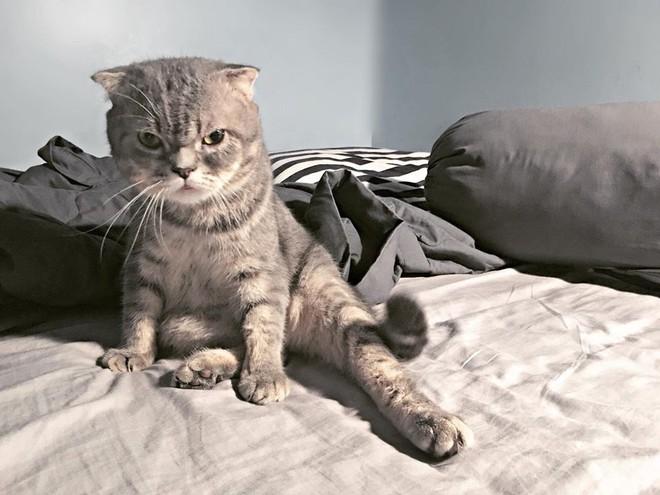 Chú mèo đã béo mặt mũi lại còn khó chịu hot nhất MXH hôm nay - ảnh 5