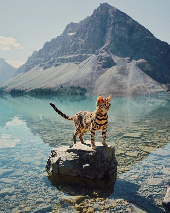 Gặp gỡ chú mèo xinh đẹp cùng cô chủ đi du lịch khắp thế gian - Ảnh 7.