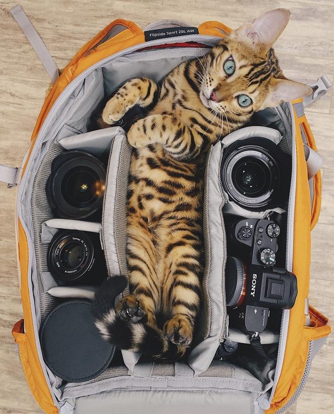 Gặp gỡ chú mèo xinh đẹp cùng cô chủ đi du lịch khắp thế gian - Ảnh 3.
