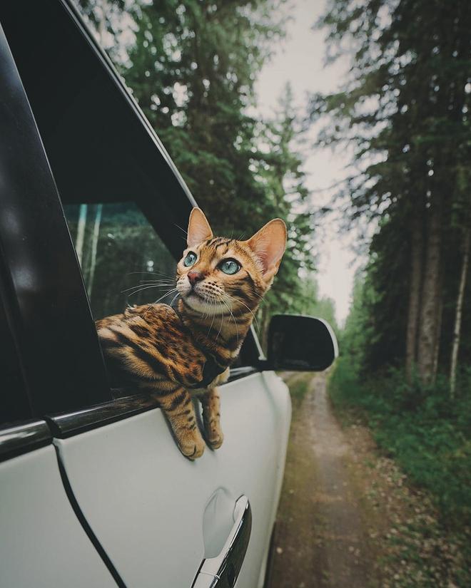 Gặp gỡ chú mèo xinh đẹp cùng cô chủ đi du lịch khắp thế gian - Ảnh 5.