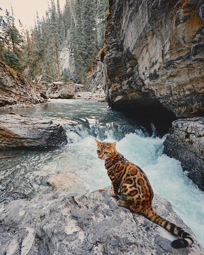 Gặp gỡ chú mèo xinh đẹp cùng cô chủ đi du lịch khắp thế gian - Ảnh 17.