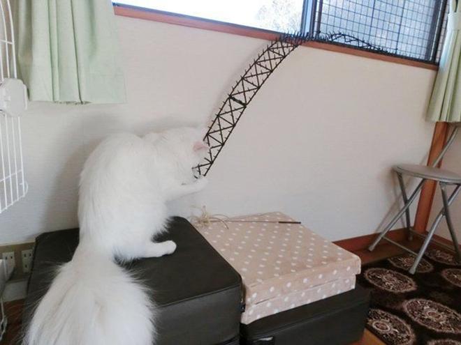 Người Nhật mua bẫy gai để ngăn mèo chạy nhảy lung tung, kết quả khiến ai cũng dở khóc dở cười - Ảnh 8.