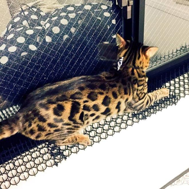 Người Nhật mua bẫy gai để ngăn mèo chạy nhảy lung tung, kết quả khiến ai cũng dở khóc dở cười - Ảnh 10.