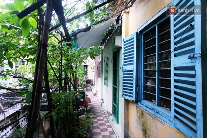 Tranh cãi vấn đề cấm nuôi chó, mèo trong chung cư ở Sài Gòn: Vẫn chưa đến hồi kết! - Ảnh 2.