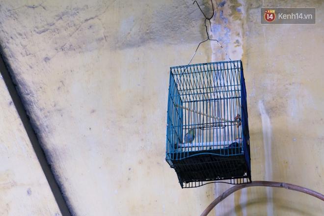 Tranh cãi vấn đề cấm nuôi chó, mèo trong chung cư ở Sài Gòn: Vẫn chưa đến hồi kết! - Ảnh 6.