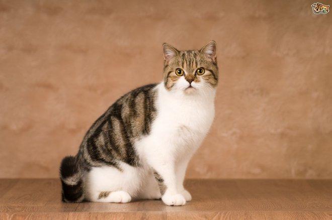 Loài mèo đã bắt đầu xâm chiếm thế giới từ khi nào? - Ảnh 3.