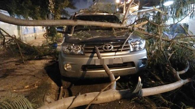 Cả gia đình suýt mất mạng khi nhánh cây to ngã đè lên ô tô ở Sài Gòn - Ảnh 2.