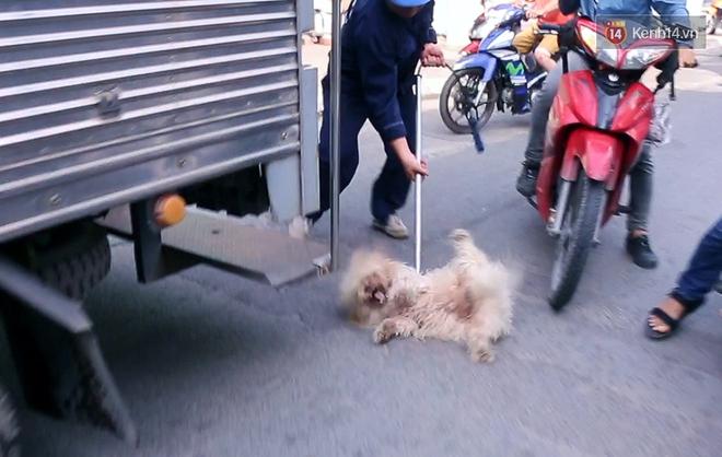 """Chó cưng bị Đội săn bắt """"tóm"""", cụ bà hớt hải: """"Nó đi chợ với tôi, đang nằm trên vỉa hè chờ tôi về cùng thì bị bắt"""" - Ảnh 6."""