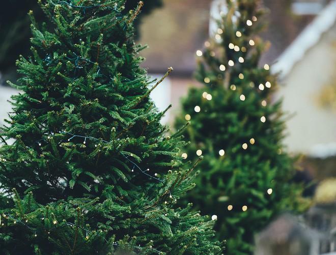 Noel này đừng chờ quà nữa, hãy tự tặng quà cho mình đi - Ảnh 1.