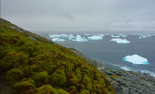 Không nhầm đâu, hình ảnh bạn đang thấy chính là Nam Cực hiện nay, và đó là tin rất không tốt - ảnh 1