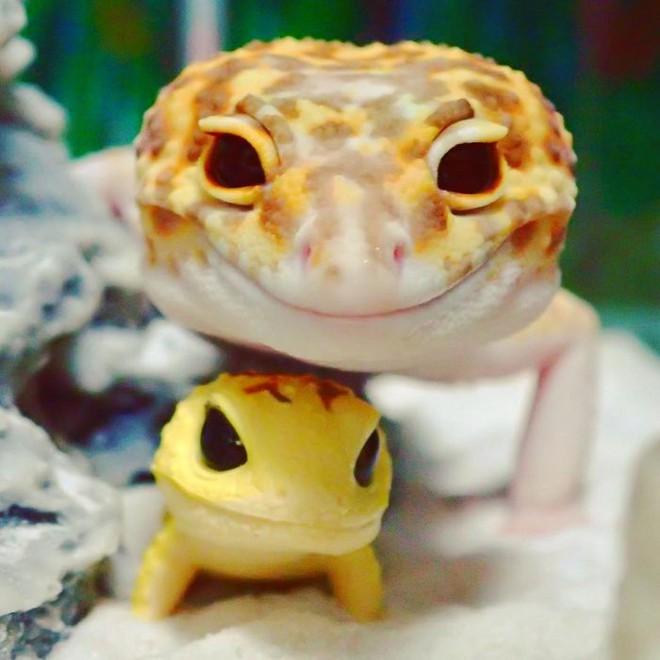 cute-happy-gecko-with-toy-kohaku-5-591e9