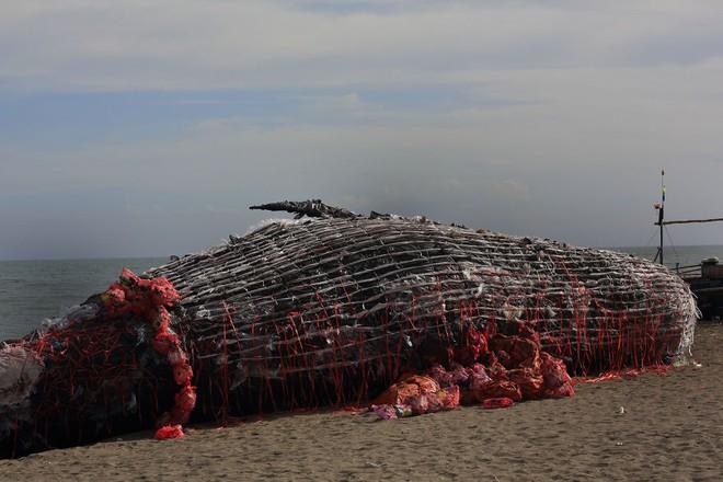 """""""Cá voi khổng lồ"""" nằm chết bên bãi biển, ai cũng sốc khi phát hiện ra thứ bên trong miệng nó - Ảnh 2"""