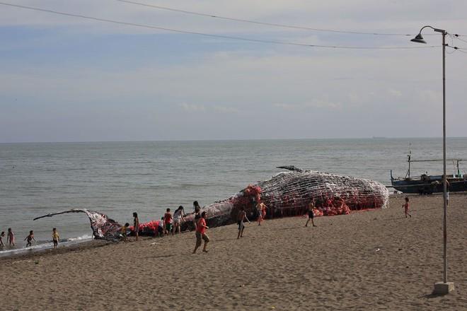 """""""Cá voi khổng lồ"""" nằm chết bên bãi biển, ai cũng sốc khi phát hiện ra thứ bên trong miệng nó - Ảnh 6"""