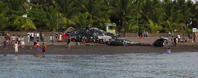 """""""Cá voi khổng lồ"""" nằm chết bên bãi biển, ai cũng sốc khi phát hiện ra thứ bên trong miệng nó - Ảnh 4"""