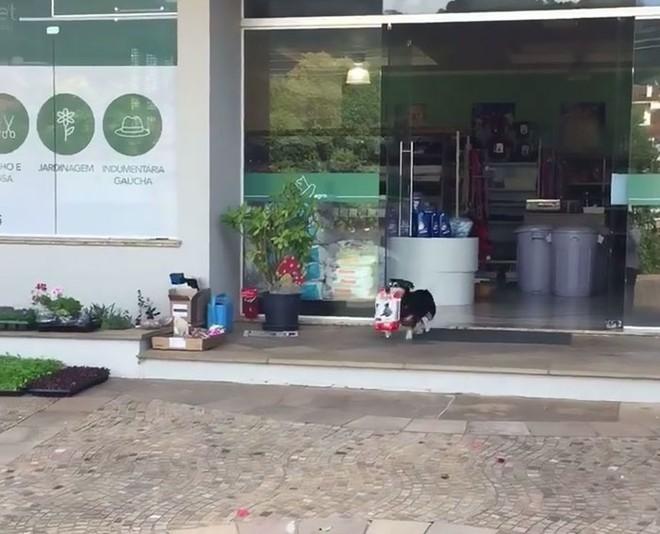 dog-buys-food-himself-pituco-brazil-1-14