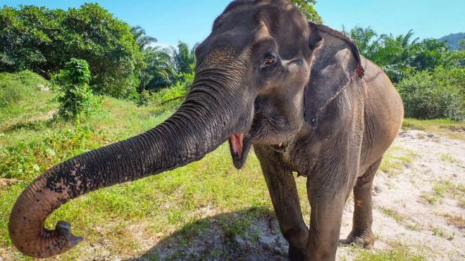 Loài voi gần như không bao giờ mắc ung thư và câu trả lời đến từ gene zombie - ảnh 1