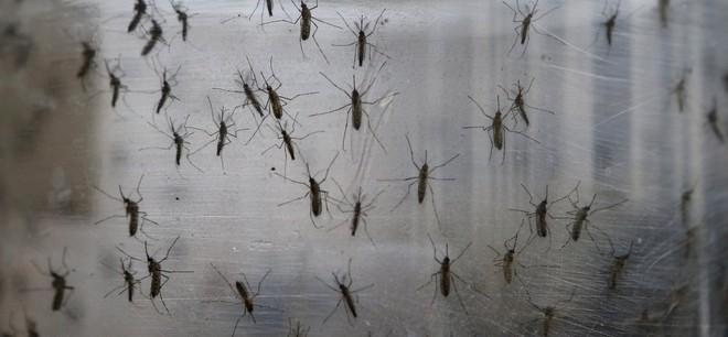 Công ty chị em của Google sắp thả 20 triệu con muỗi ra càn quét nước Mỹ - Ảnh 1.