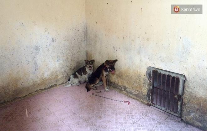 Chó cưng bị Đội săn bắt tóm, cụ bà hớt hải: Nó đi chợ với tôi, đang nằm trên vỉa hè chờ tôi về cùng thì bị bắt - Ảnh 11.