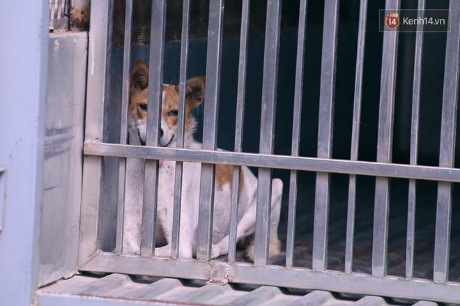 Những con chó bị bắt nhốt do không rọ mõm.