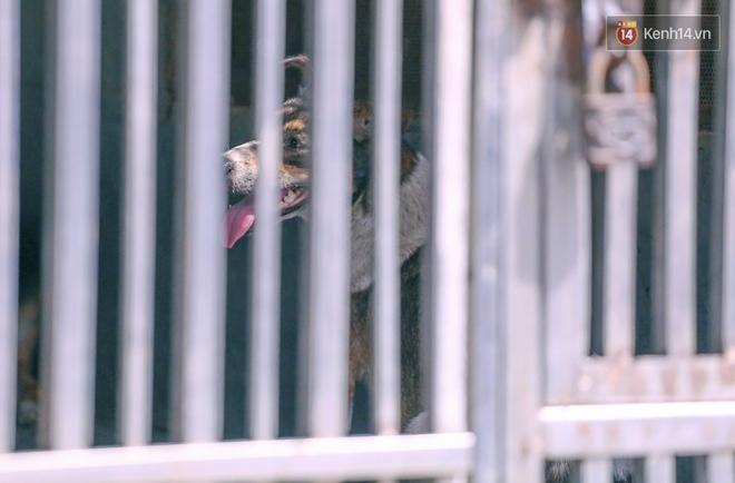 """Chó cưng bị Đội săn bắt """"tóm"""", cụ bà hớt hải: """"Nó đi chợ với tôi, đang nằm trên vỉa hè chờ tôi về cùng thì bị bắt"""" - Ảnh 4."""