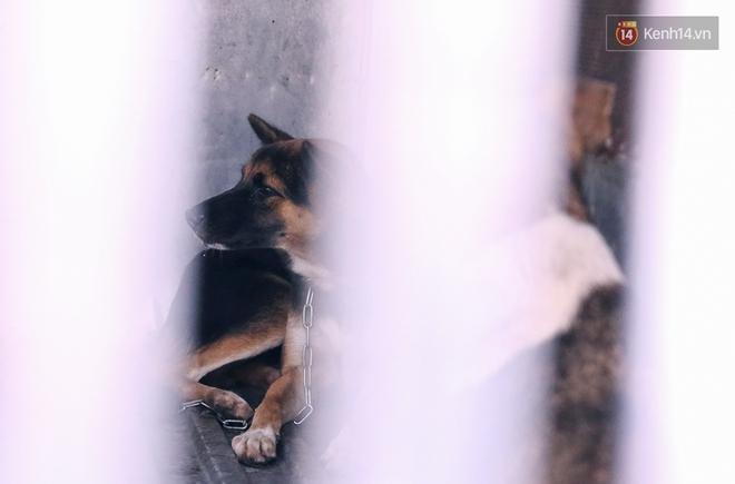 Chó cưng bị Đội săn bắt tóm, cụ bà hớt hải: Nó đi chợ với tôi, đang nằm trên vỉa hè chờ tôi về cùng thì bị bắt - Ảnh 9.