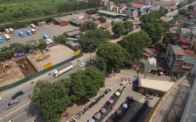 Hà Nội: Nhìn lại 1.300 cây xanh trên đường Phạm Văn Đồng sẽ bị chặt hạ trong 3 tháng tới - Ảnh 2.