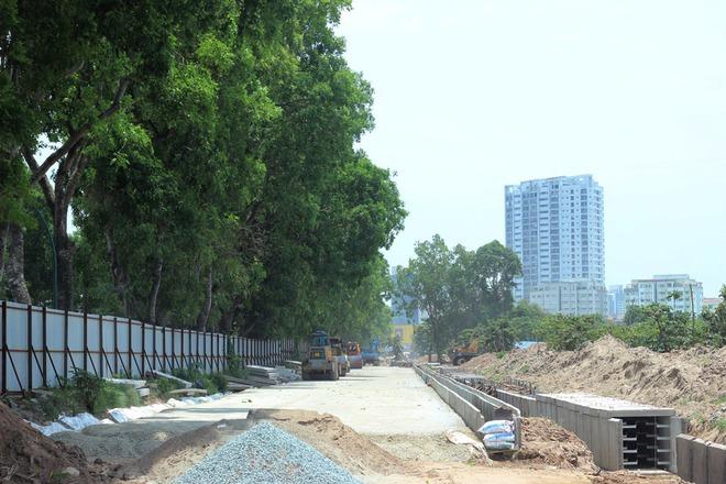 Hà Nội: Nhìn lại 1.300 cây xanh trên đường Phạm Văn Đồng sẽ bị chặt hạ trong 3 tháng tới - Ảnh 7.