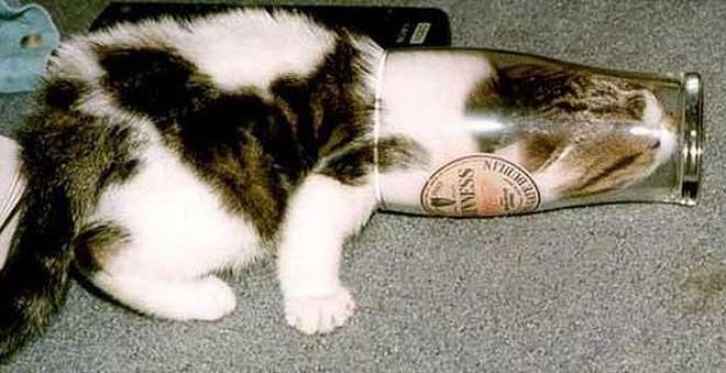 Mèo có phải là một loại chất lỏng? Đáp án cực bất ngờ nhé các bạn! - ảnh 4