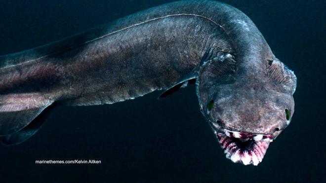 Bắt được loài cá mập thân dài như rắn, miệng 300 răng có từ thời tiền sử - Ảnh 2.