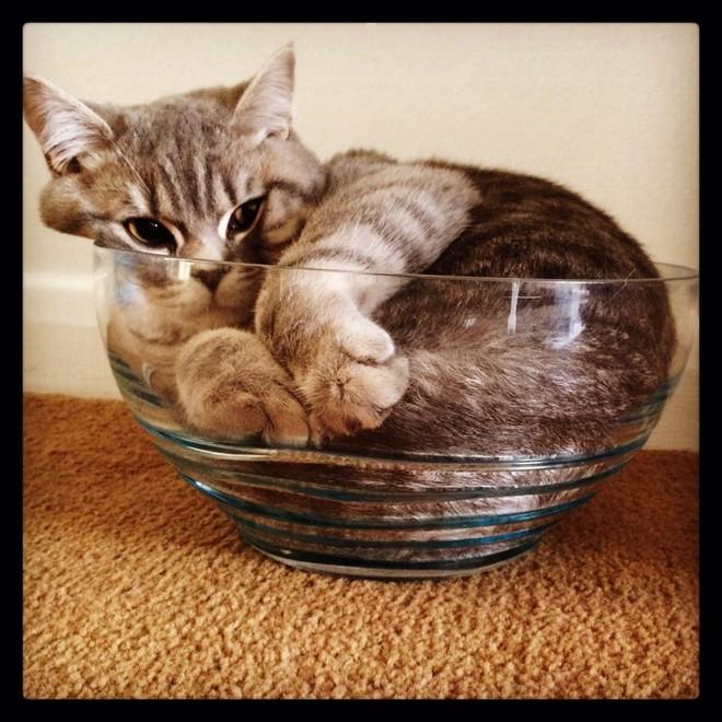 Mèo có phải là một loại chất lỏng? Đáp án cực bất ngờ nhé các bạn! - ảnh 1