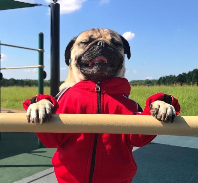 Nhìn cách chó Pug mặt xệ sành điệu hưởng thụ mùa hè, chỉ muốn ôm phản, lao ra biển - Ảnh 4.