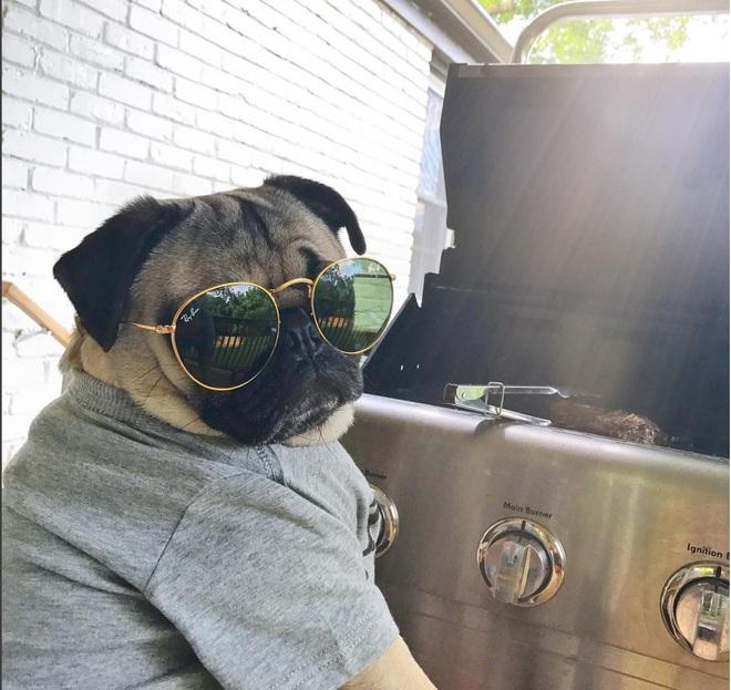 Nhìn cách chó Pug mặt xệ sành điệu hưởng thụ mùa hè, chỉ muốn ôm phản, lao ra biển - Ảnh 5.