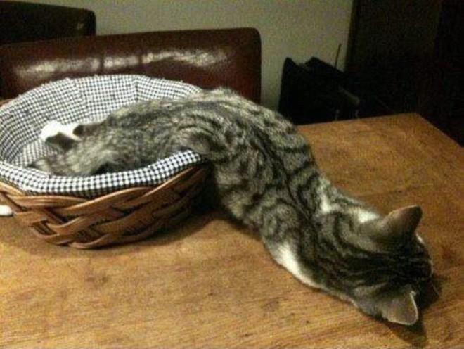 Mèo có phải là một loại chất lỏng? Đáp án cực bất ngờ nhé các bạn! - ảnh 3