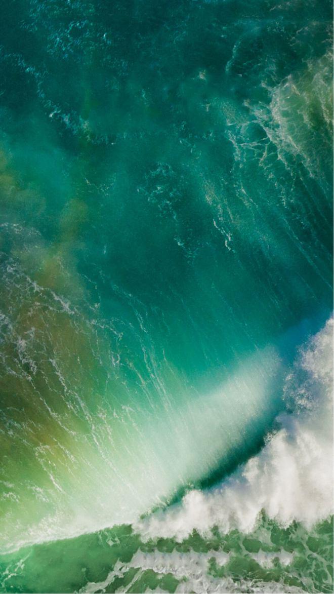 Những chú cá nhiều lần gắn liền với hình ảnh iPhone nhưng chẳng ai biết vì sao - Ảnh 6.