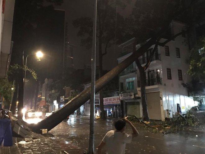 Mưa to kèm sấm sét kinh hoàng, cây cổ thụ bật gốc đổ sập vào nhà dân ở Sài Gòn khiến nhiều người sợ hãi - ảnh 1