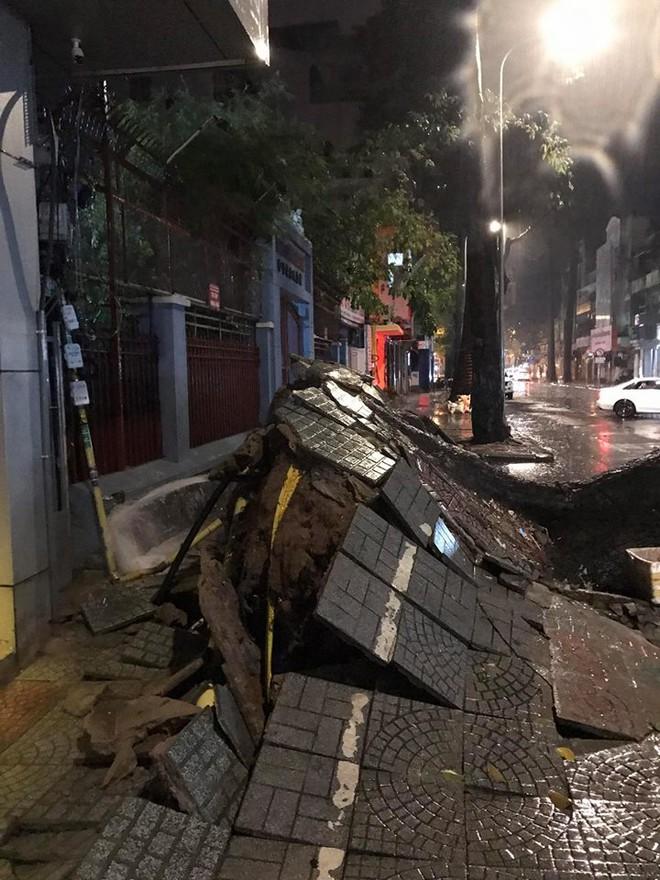 Mưa to kèm sấm sét kinh hoàng, cây cổ thụ bật gốc đổ sập vào nhà dân ở Sài Gòn khiến nhiều người sợ hãi - ảnh 2