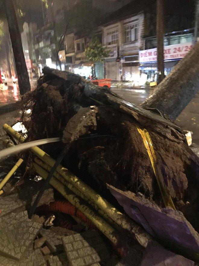 Mưa to kèm sấm sét kinh hoàng, cây cổ thụ bật gốc đổ sập vào nhà dân ở Sài Gòn khiến nhiều người sợ hãi - ảnh 3