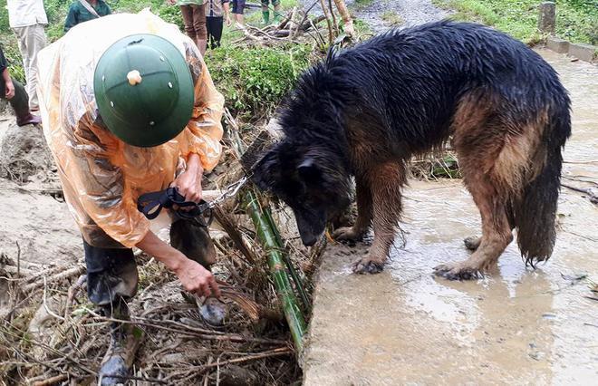 Tình đồng đội đặc biệt giữa chiến sĩ cảnh sát và chú chó nghiệp vụ trên hành trình cứu hộ sau sạt lở kinh hoàng ở Hòa Bình - ảnh 1