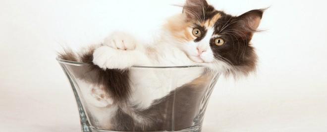 Mèo có phải là một loại chất lỏng? Đáp án cực bất ngờ nhé các bạn! - ảnh 6