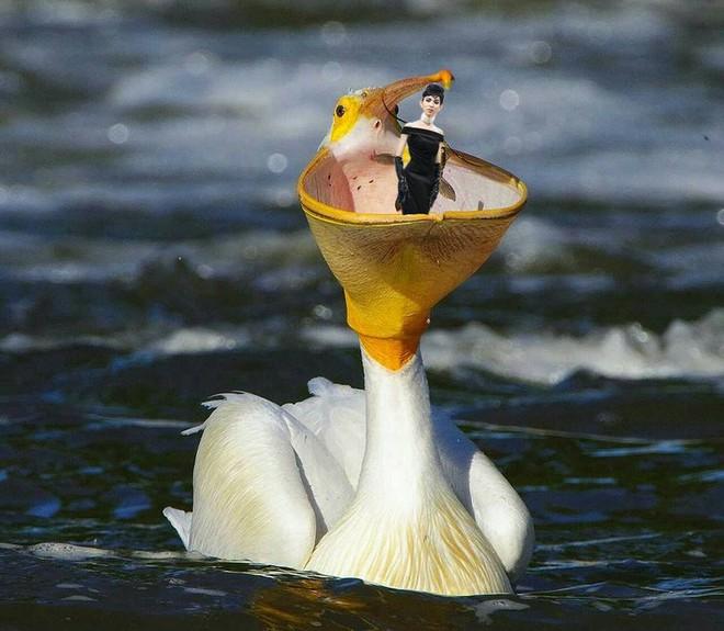 Hình ảnh Thùy Dương Next Top hoá thân thành Audrey Hepburn được chế thành loạt ảnh siêu buồn cười - ảnh 5