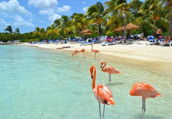 Nóng như thế này chỉ muốn đến ngay thiên đường Aruba tắm biển, thỏa thích chụp ảnh sống ảo cùng hồng hạc mà thôi! - Ảnh 15.