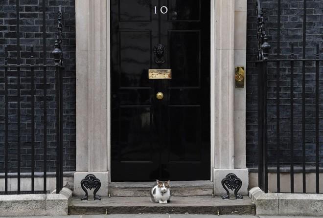 Một thập kỷ trong phủ Thủ tướng của con mèo béo vô dụng nhưng quyền lực nhất nước Anh - Ảnh 2.