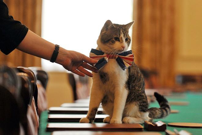 Một thập kỷ trong phủ Thủ tướng của con mèo béo vô dụng nhưng quyền lực nhất nước Anh - Ảnh 4.