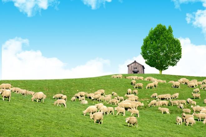Đến Hàn Quốc, nhớ ghé trại cừu đẹp như phim mà Xuân Trường đã hẹn hò cùng bạn gái tin đồn - Ảnh 2.