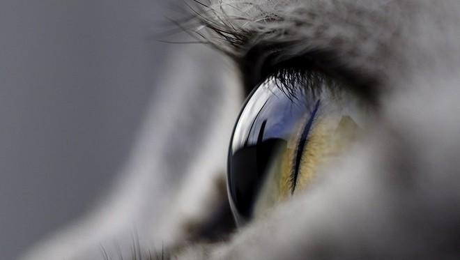 Chớp mắt liên tục nhưng tại sao chúng ta không thấy tối? Đừng tưởng đây là câu hỏi đơn giản, nó không dễ trả lời đâu - ảnh 3