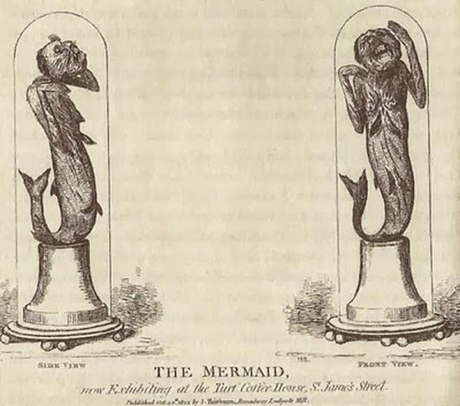 Bí ẩn thế giới: Sự thật xoay quanh câu chuyện về Người Cá và những truyền thuyết ít người biết tới (P2) - ảnh 3