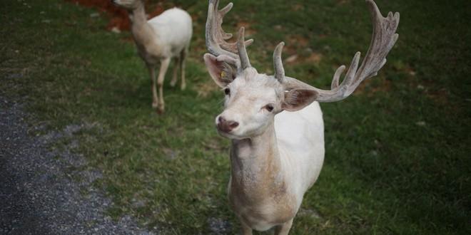 Nước Mỹ có 9 điều luật quái lạ về động vật, riêng con thứ 9 chưa chắc đã tồn tại - ảnh 7