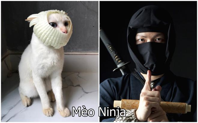 Xuất hiện boss mèo có biệt tài diễn xuất, hóa thân thành 12 nhân vật chỉ với miếng xốp bọc lê - Ảnh 7.