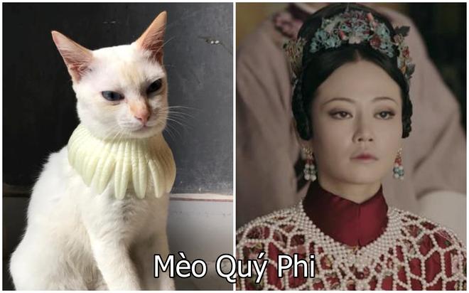 Xuất hiện boss mèo có biệt tài diễn xuất, hóa thân thành 12 nhân vật chỉ với miếng xốp bọc lê - Ảnh 8.